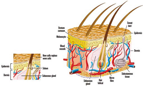 Oratane - What is Acne?
